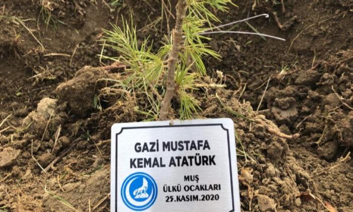 Terörün yaktığı ormanları Ülkü Ocakları yeşertiyor