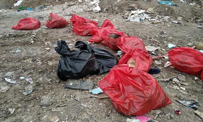 Ankara'da molozların arasında 20 ölü köpek bulundu