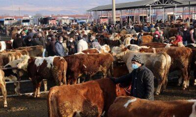 Türkiye'nin en büyük canlı hayvan pazarı için karar