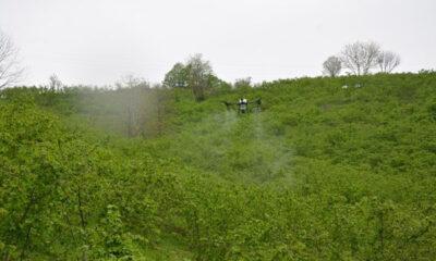 Ordu'da fındık bahçeleri ZİHA ile ilaçlanmaya başlandı