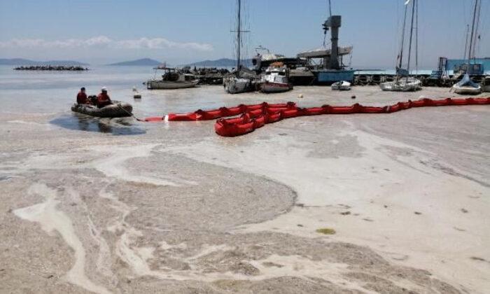Bakanlık ilk adımı attı; Deniz salyası temizliği başladı