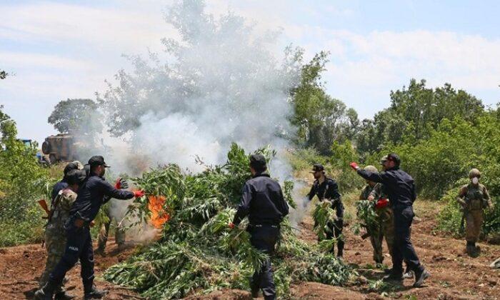 Jandarma PKK'nın uyuşturucu tarlalarını imha etti