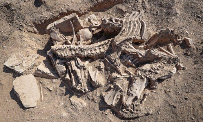 Van'da Köpeği, 4 atı, sığır ve koyunuyla gömülen Urartulunun mezarı arkeologları heyecanlandırdı